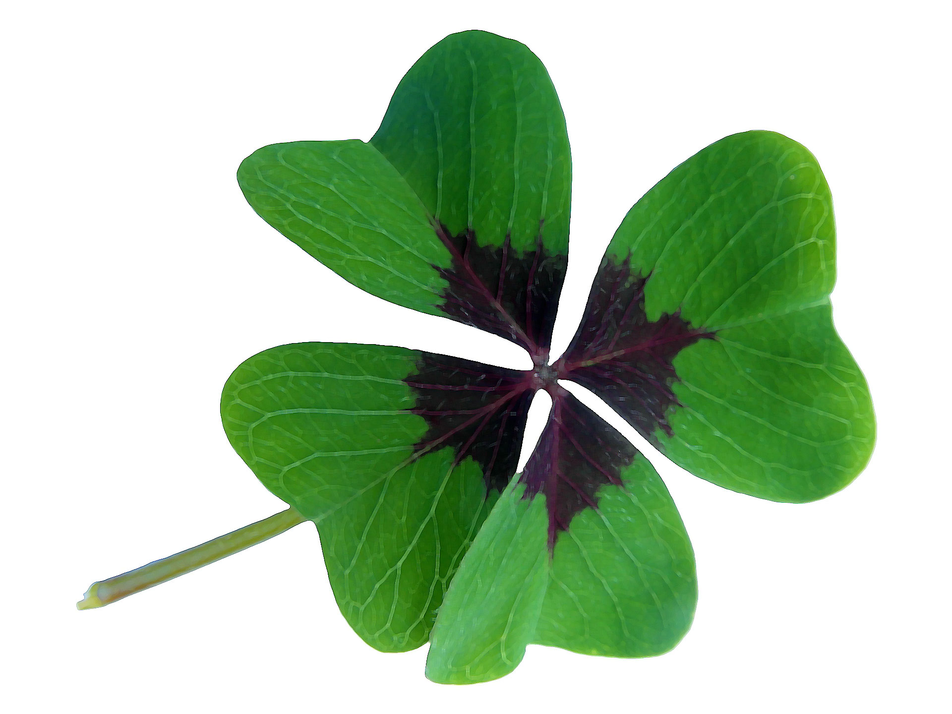 Holiday Painting Events - St. Patricks Day